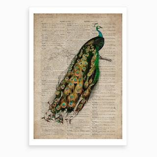 Peacock Dictionnaire Universel D Histoire Naturelle Art Print