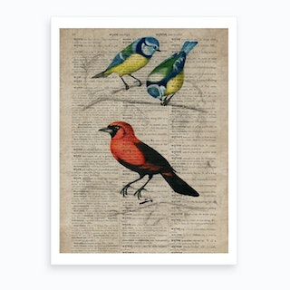 Great Tit And Scarlet Tanagerhumming Bird Dictionnaire Universel Dhistoire Naturelle  Art Print