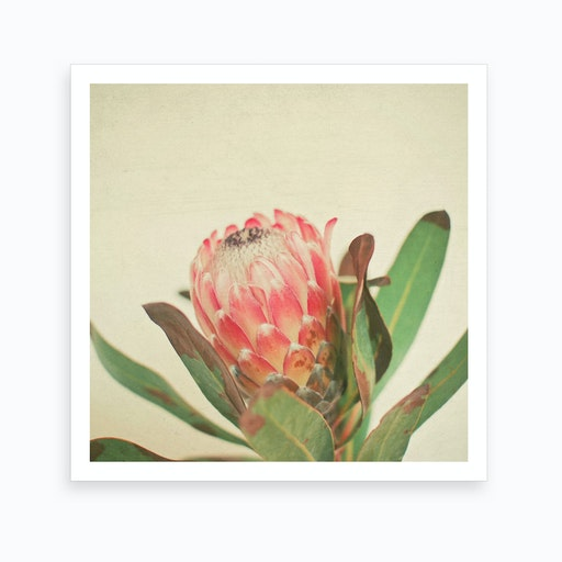 Red Blossom Art Print