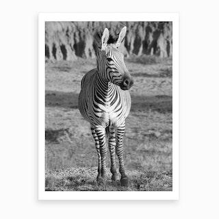 Mountain Zebra Portrait Art Print