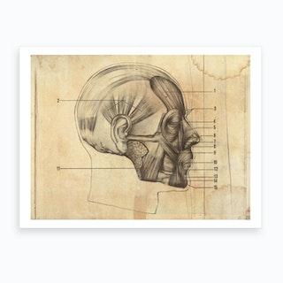 Vintage Anatomy Muscles Face Art Print