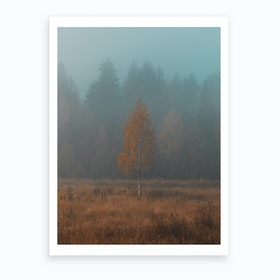 Lonely Birch Art Print