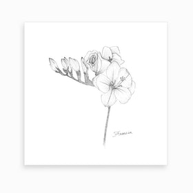 Freesia 2 Art Print