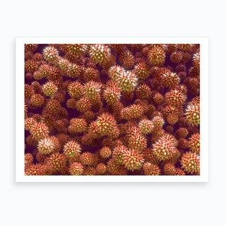 Pollen Grains Asteraceae 02 Art Print