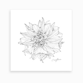 Cornflower 2 Art Print