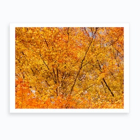 Autumn Yellow Leaves Art Print