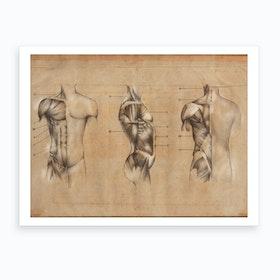 Vintage Anatomy Muscle Body Art Print