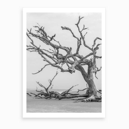 Dead Tree Art Print