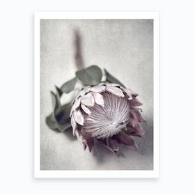 Pale Proteas 5 Art Print