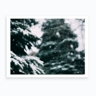Snow And Trees Art Print