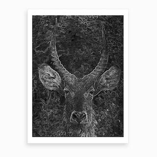 Antelope Art Print
