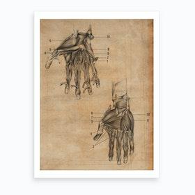 Vintage Anatomy Muscle Hands Art Print