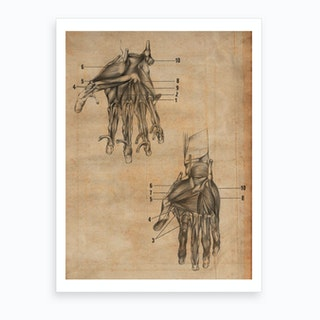 Vintage Anatomy Muscle Hands Art Print
