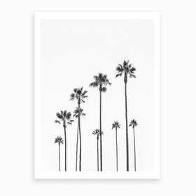 Black Palm Trees Art Print
