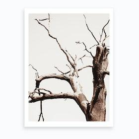 Desert Tree II Art Print