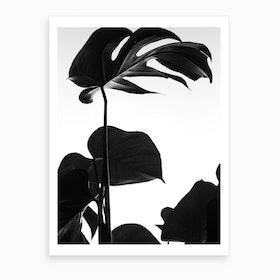 Black And White Monstera Photo Art Print