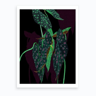 Begonia Maculata On Black Art Print