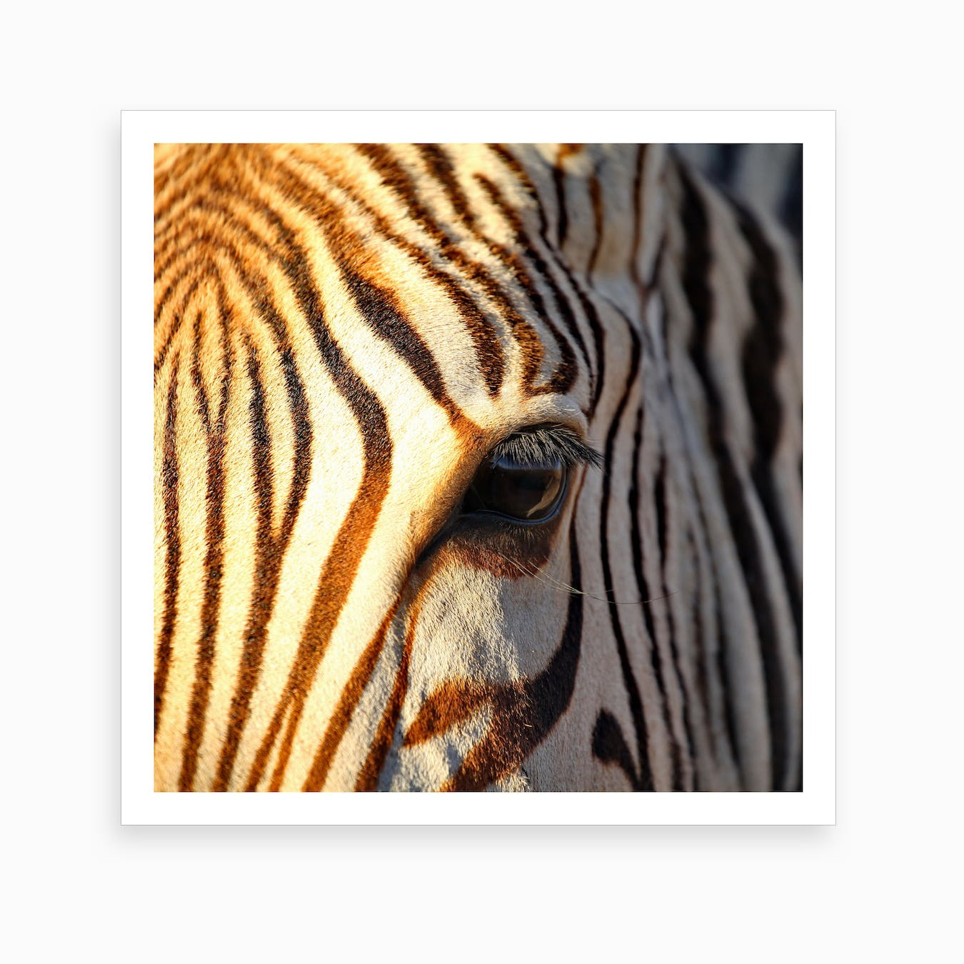 Zebra Eye II Art Print