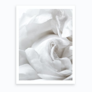 White Rose I Art Print