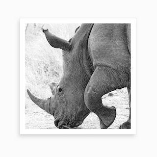 Rhino Square Art Print