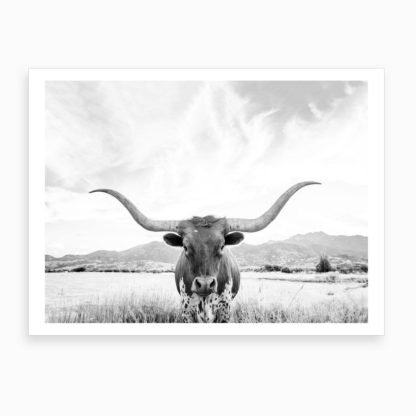 Longhorn Texas Art Print