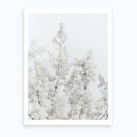 White Plant Art Print