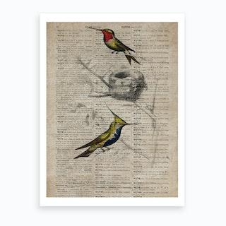Humming Bird Dictionnaire Universel Dhistoire Naturelle  Art Print