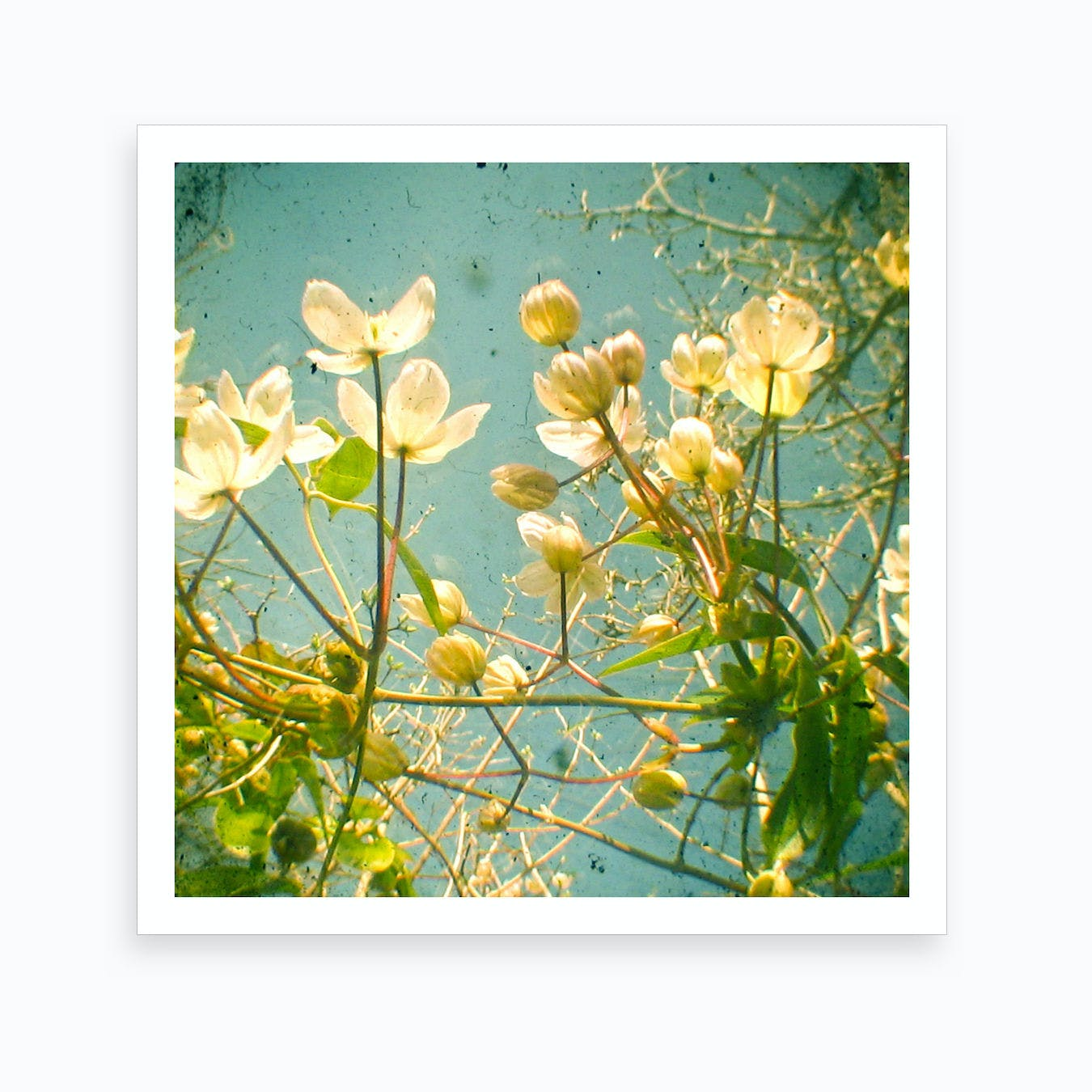 Leaves And Flowers Art Print