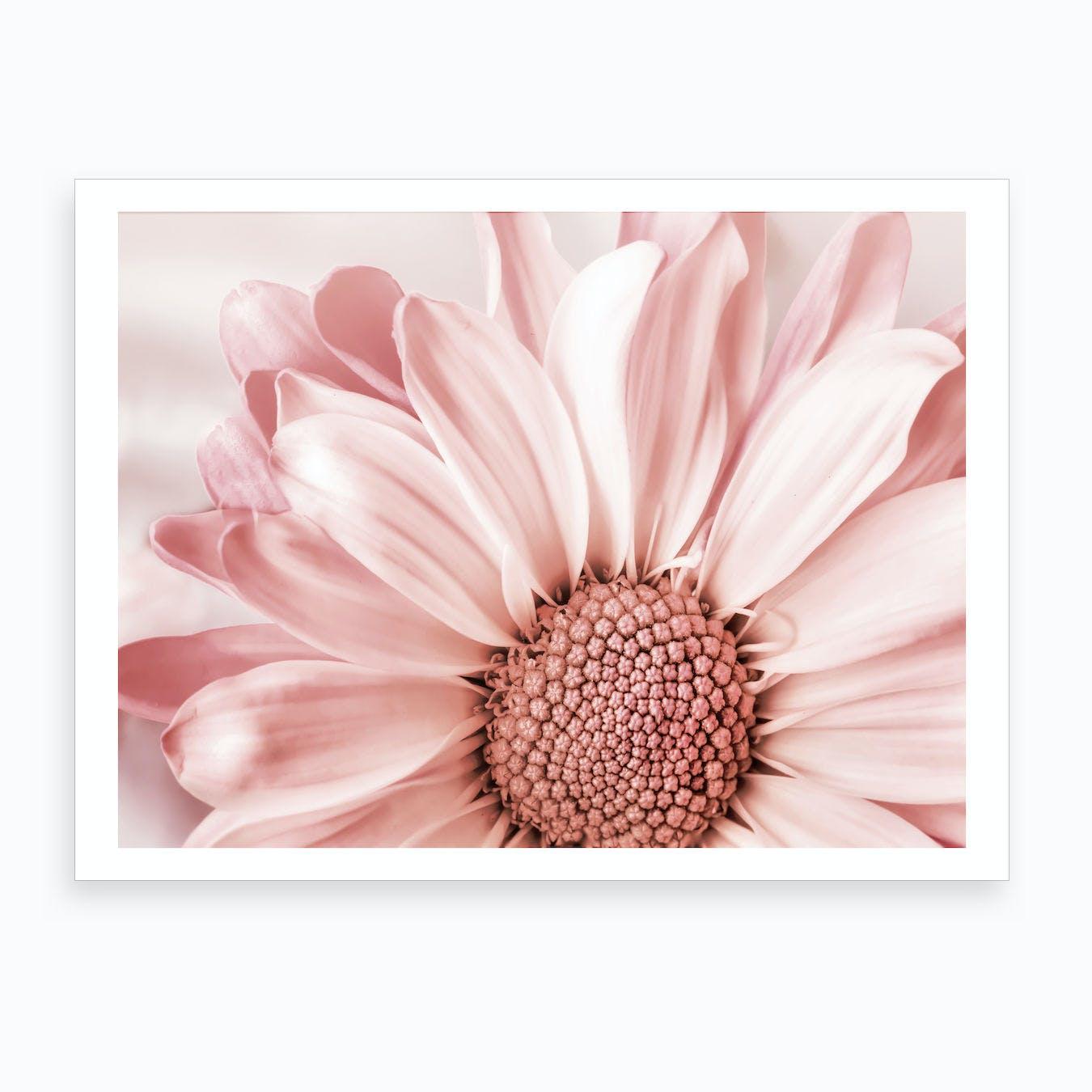 Blush Flower Art Print