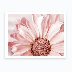 Blush Flower Art Print