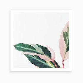 Pink Leaves Ii Art Print