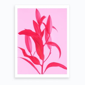Neon Pink Lilly Art Print