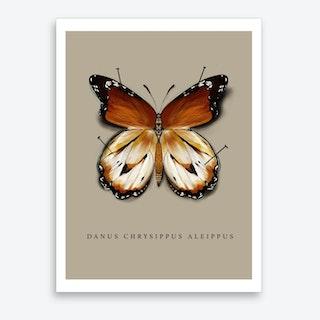 Butterfly No9 Art Print