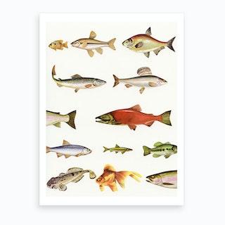 Fishing Line Art Print