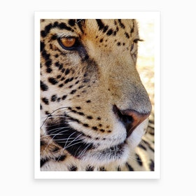 Jaguar Face Art Print
