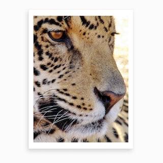Jaguar Face Art Print