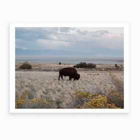 Bison In The Field Art Print