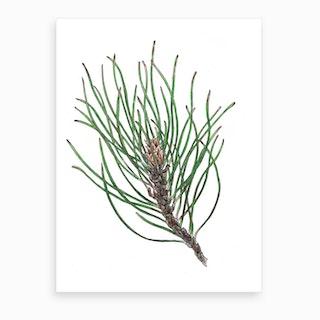 Pine Spray 2 Art Print