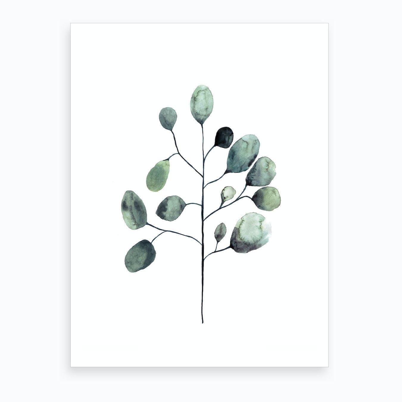 Botanical Illustration   Tasmanian Blue Gum Art Print