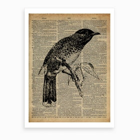 Starling Bird Art Print