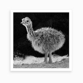 Ostrich Baby II Art Print