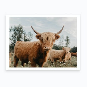Curious Highland Cow Art Print