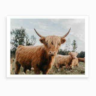 Curious Highland Cow Art Print