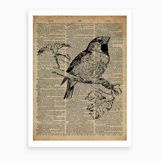 Wren Bird Art Print