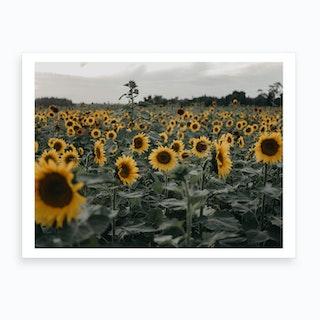 Sunflower Skies Art Print