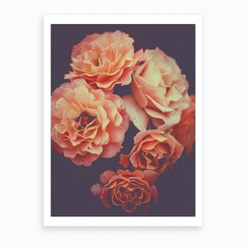 Roses Flowers Decor Art Print