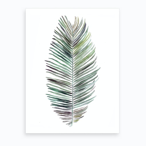 Botanical Illustration   Cocos Nucifera Art Print