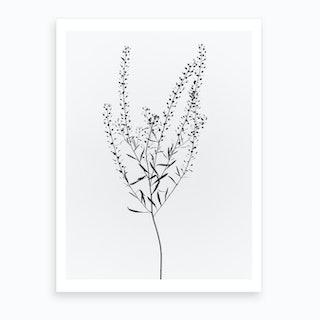Driead Plant I Art Print