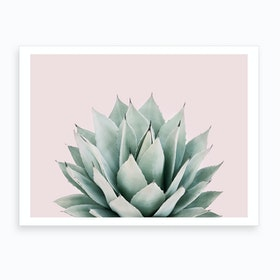 Blushing Succulent Art Print