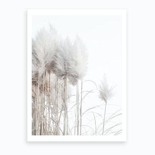 Pampas Grass II Art Print